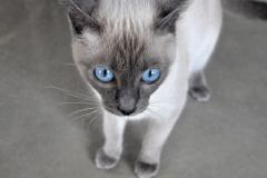 COCO_Pure_Blue_PL-1
